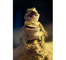 Dragons Photographic Print