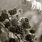 Summer Fruit, Beaming Sun, a Feather and a Spiders Web. by Lou Wilson
