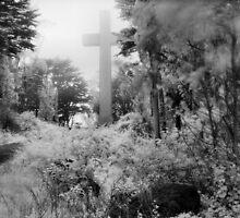 Mount Davidson, San Francisco by Rodney Johnson