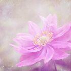 windflower by Iris Lehnhardt