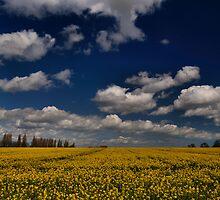Field Of Dreams by Stuart Chapman