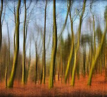 Ghostly Trees  by Iain Mavin