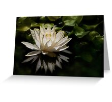 Glowing ivory waterlily Greeting Card