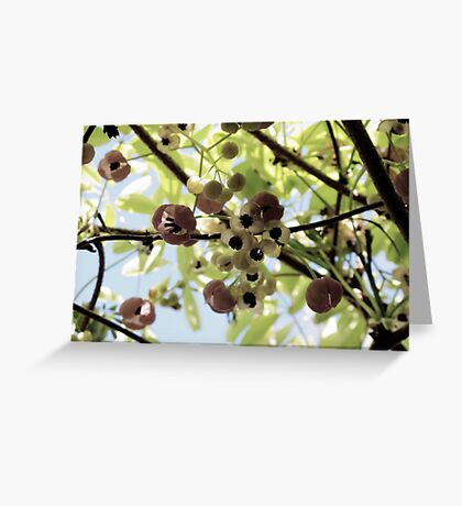 The Chocolate Vine Greeting Card
