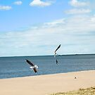 Dancing Seagulls by -aimslo-
