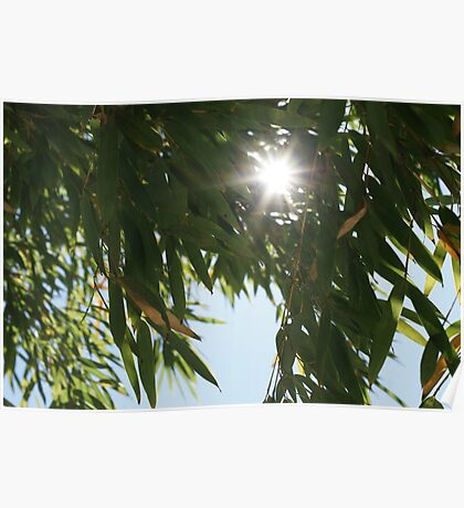 Sun through the leaves Poster