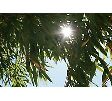 Sun through the leaves Photographic Print