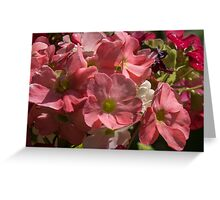 Salmon coloured flowers Leith Park Victoria 201509240402   Greeting Card