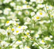 Large field overgrown with small white daisy flowers closeup Sticker