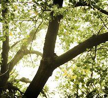 It's All About Light by KatsEyePhoto