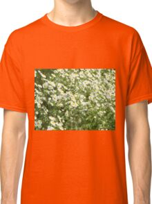 Large field overgrown with small white daisy flowers closeup Classic T-Shirt
