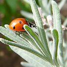 cute little ladybug by tego53