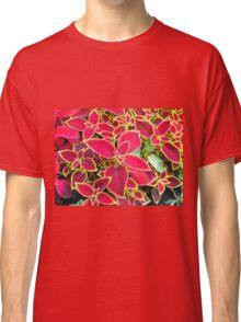 Decorative red Coleus Classic T-Shirt