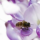 Bee On Wisteria Flowers by Evita