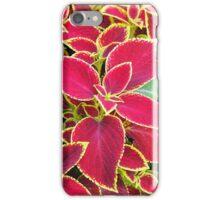 Red Coleus plant closeup iPhone Case/Skin