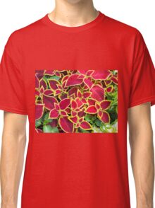 Decorative red and yellow coleus Classic T-Shirt