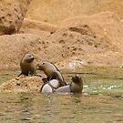 Seal Cubs at Play 2 by Werner Padarin