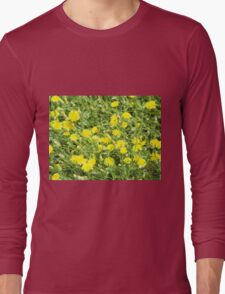 Thickets of small yellow flowers Picris Rigida at forest lawn Long Sleeve T-Shirt