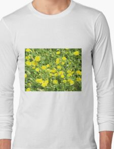 Thickets of small yellow flowers Picris Rigida at forest lawn T-Shirt