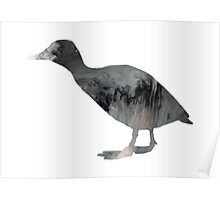 Canvasback Poster