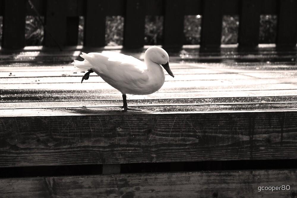 Duck Yoga by gcooper80
