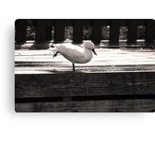 Duck Yoga Canvas Print