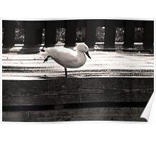 Duck Yoga Poster