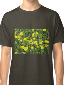 Thickets of small yellow flowers Picris Rigida Classic T-Shirt