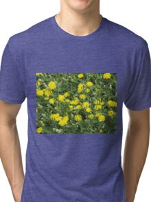 Thickets of small yellow flowers Picris Rigida Tri-blend T-Shirt