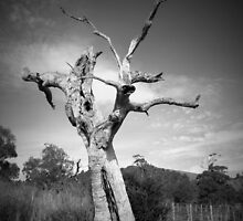 Scary Tree- Southern Vales by Ben Loveday