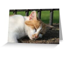 Cat Nap Greeting Card