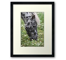 Pony In The Daisies Framed Print