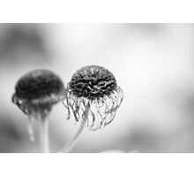 Flower heads gone... Photographic Print
