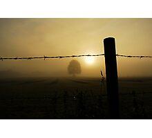 """MORNING DEW"" Photographic Print"