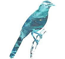 Catbird Photographic Print