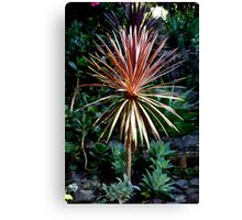 The spiky bush. Canvas Print
