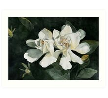 Gardenia Duo 1 Art Print