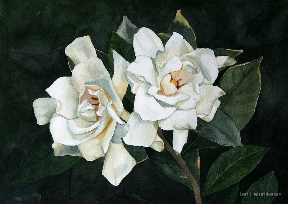 Gardenia Duo 2 by Jan Lawnikanis