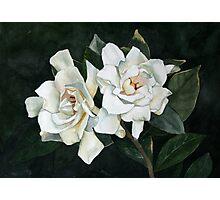 Gardenia Duo 2 Photographic Print