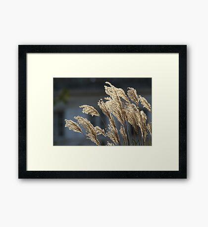 Reeds Framed Print