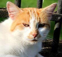 Farm Cat by Samantha Higgs