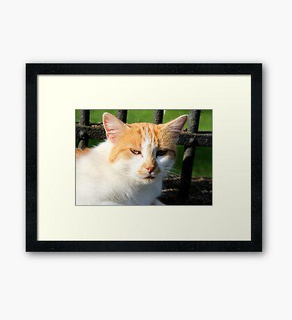Farm Cat Framed Print