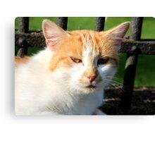 Farm Cat Canvas Print