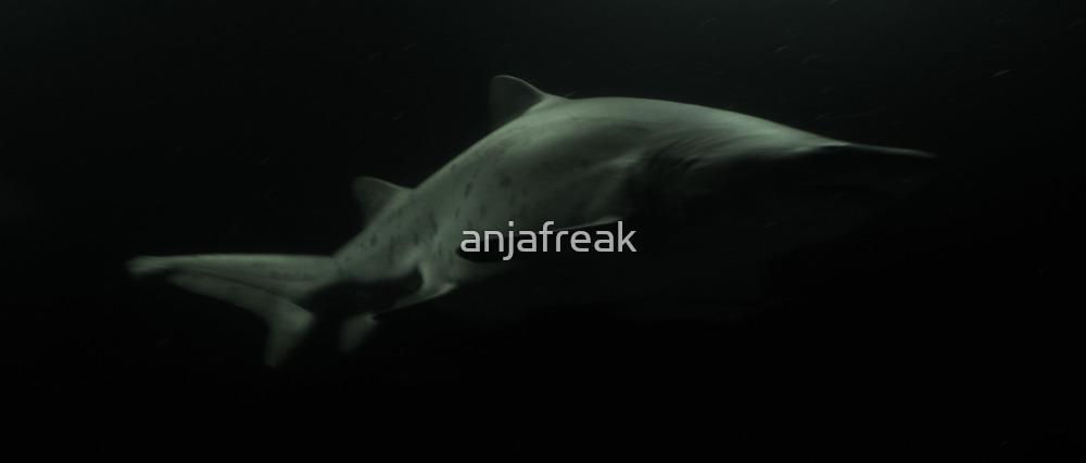 Elegant Shark by anjafreak