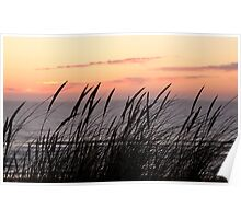 Dune Grass At Sunset Poster