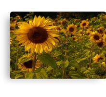 Fractual Sunflowers Canvas Print