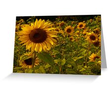 Fractual Sunflowers Greeting Card
