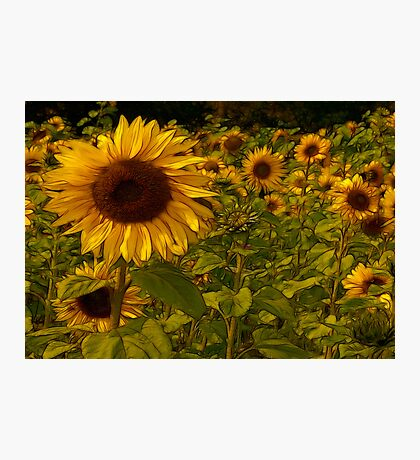 Fractual Sunflowers Photographic Print