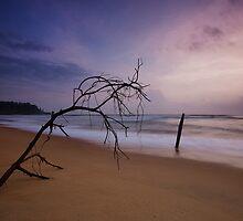 Sunset branch by Deepak Varghese
