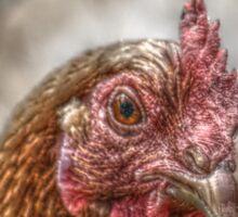 Chicken HDR style Sticker